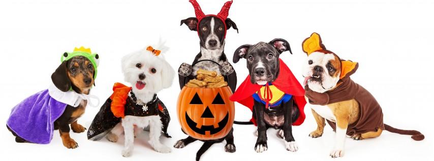Howl-O-Ween Pet Costume Contest - MacArthur