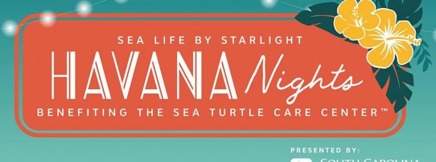 Sea Life by Starlight