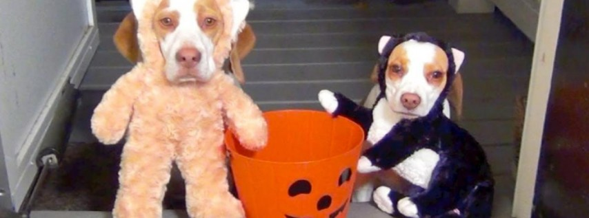 Doggie Trick-or-Treat