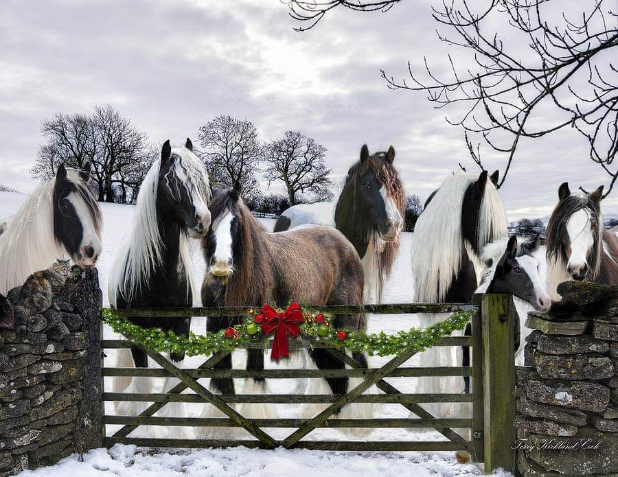 Christmas Mini Photo Sessions with C Ponies!
