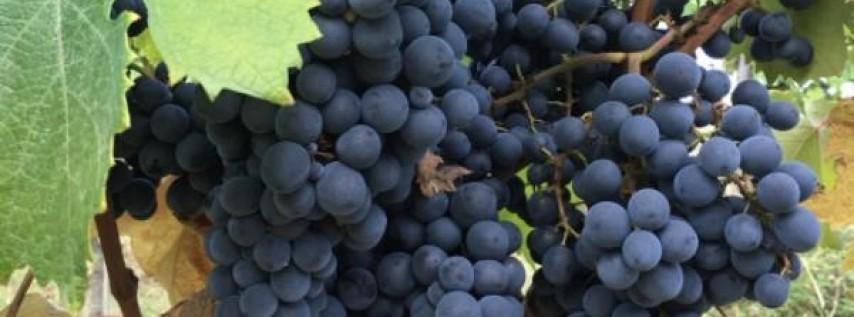 Bellina Alimentari's I Love Vino for Lovebirds Class