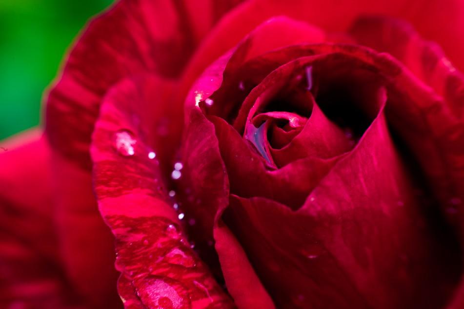 Musique Romantique—Valentine Dinner Show+
