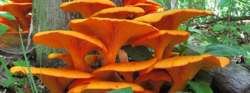 Wildflower & Mushroom ID
