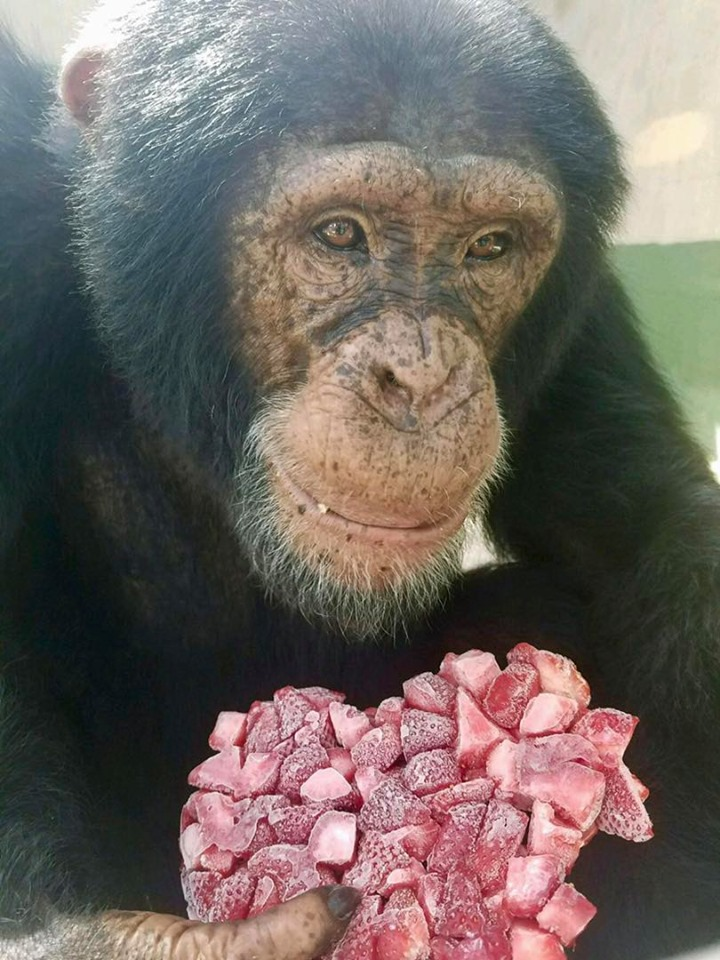 Suncoast Primate Sanctuary will be open 10AM-4PM 1/20/20
