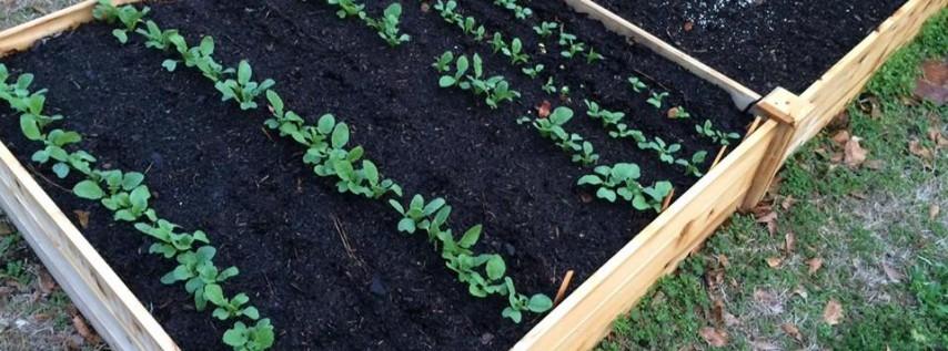Raised Bed Gardening 101