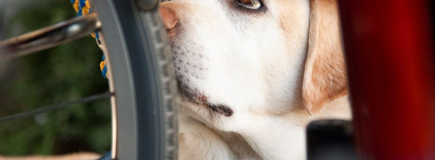 DogFest Jacksonville