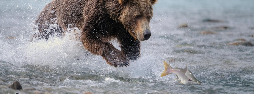Fort Worth Foto Fest: Wild Alaska w/ David Morgan!