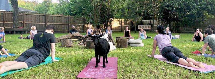 St. Patrick's Day Summerville Goat Yoga at Flowertown Charm Mini-Farm