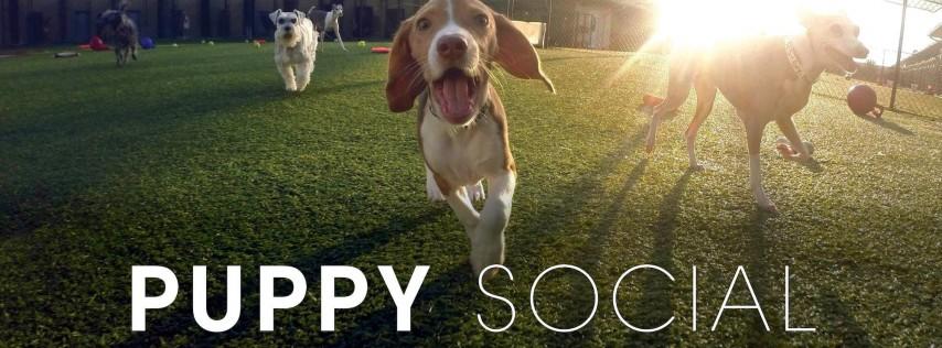 Pet Paradise Palm Coast Puppy Social 2019