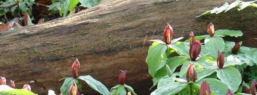 Interpretive Hike: Spring Wildflowers