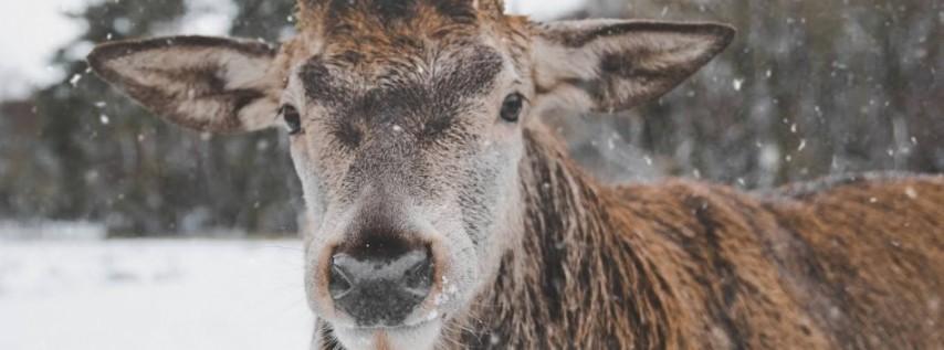 2019 Reindeer Romp 5k & 10k