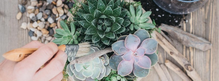 Live Oak Bank Employee Succulent Potting Party Hosted By The Coastal Succulent