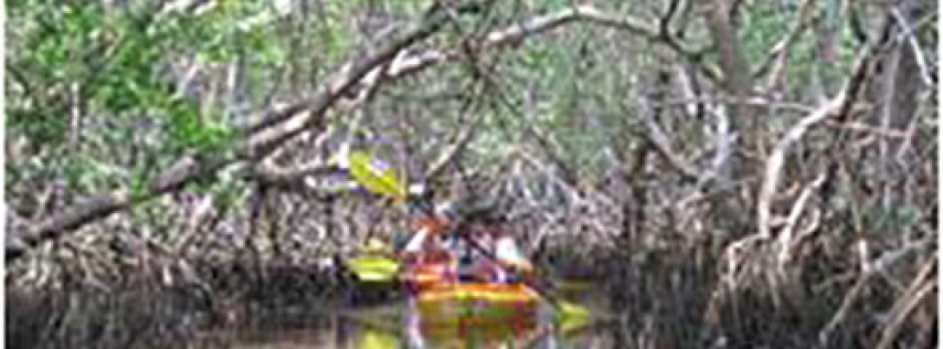 Weedon Island Preserve Kayak Tours
