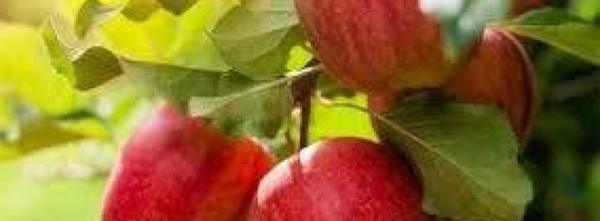 JCMGA Fruit Tree Care Class