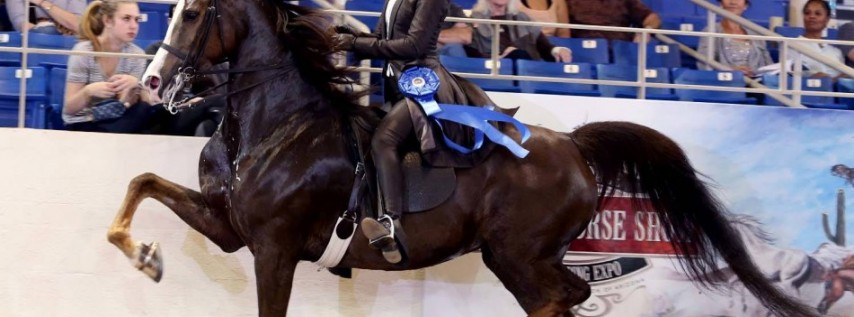 How To Watch Scottsdale Arabian Horse Show 2020 Live