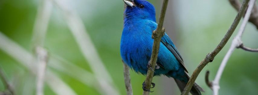 Interpretive Hike: Migratory Songbirds