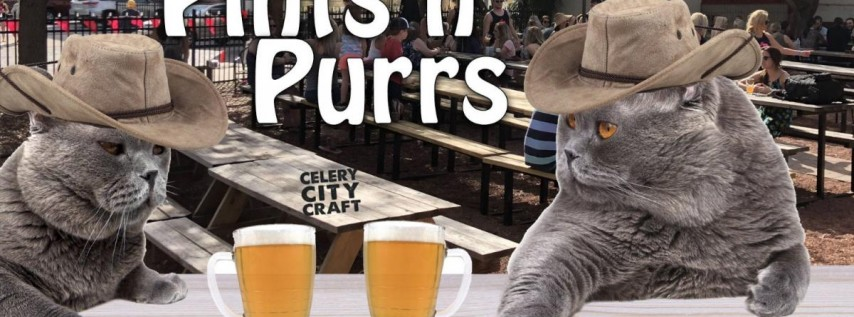 Pints n' Purrs Fundraiser for Celery City Cat Cafe
