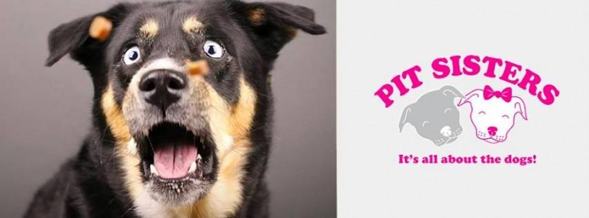 Pet Photo Shoot Fundraiser for Pit Sisters | Jacksonville, FL
