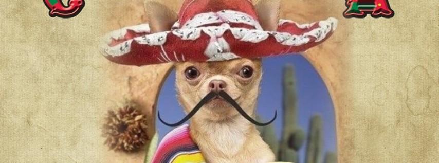 Chihuahua Cha-Cha
