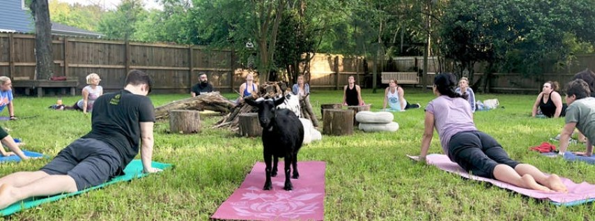 Cinco De Mayo (May 3) Summerville Goat Yoga at Flowertown Charm Mini-Farm