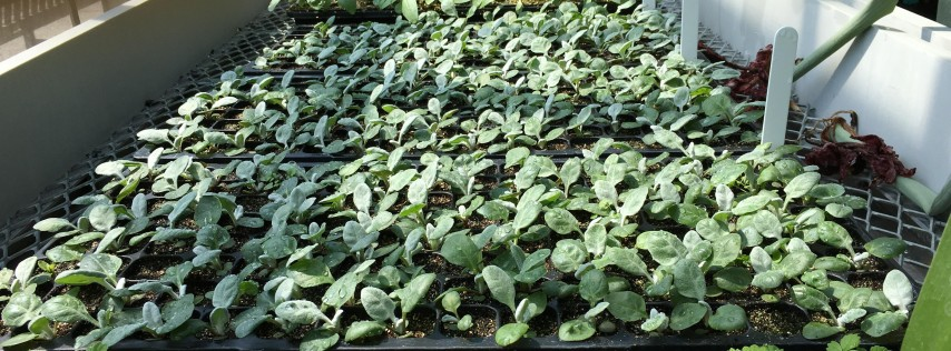 Cutting Propagation for the Home Gardener