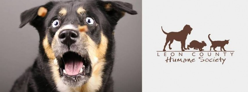 Pet Photo Shoot Fundraiser for Leon County Humane Society