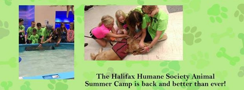 Animal Summer Camp