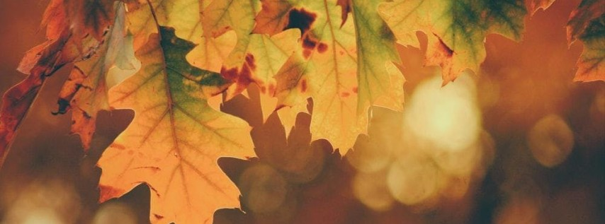 Meditation Meet-Up Topic: Fall Colors Meditation