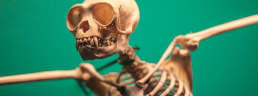 SciArt Meetup: Skeletons
