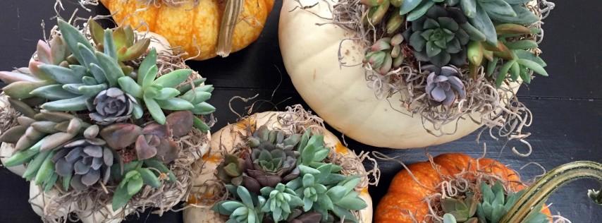 Lucky's Market Succulent Pumpkin Centerpiece Workshop