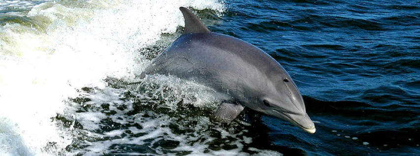 SIGHTSEEING CRUISE & DOLPHIN QUEST
