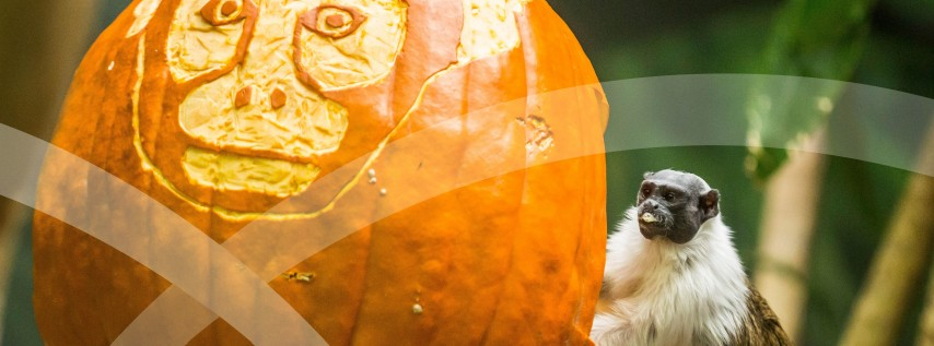 Adults Night Out: The Great Pumpkin Glow