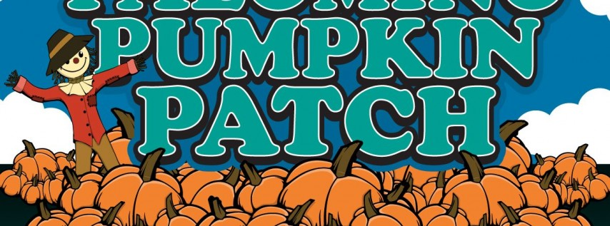 Palomino Pumpkin Patch