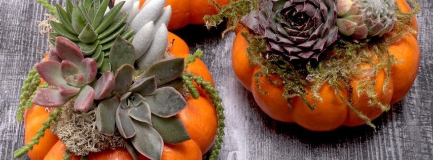 Succa For Fall - Tiny Pumpkins + Succulents Class