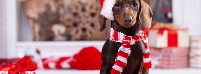 Holiday Dog Walk & Costume Contest