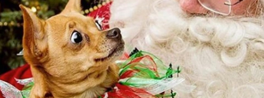 Doggie Santa Pics