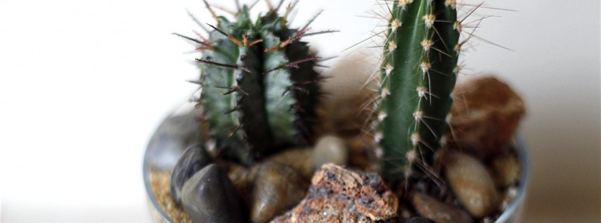 Cacti Building Workshop