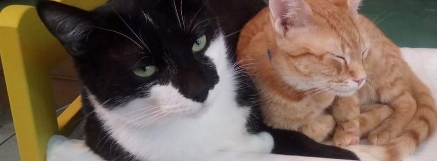 Valentine's Date Night + Cats