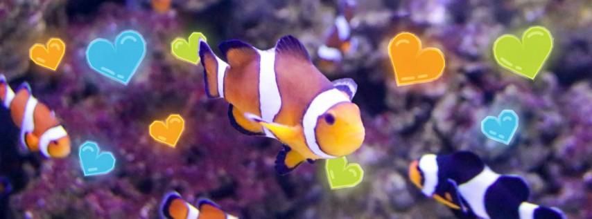 Valentine's Morning at the Aquarium