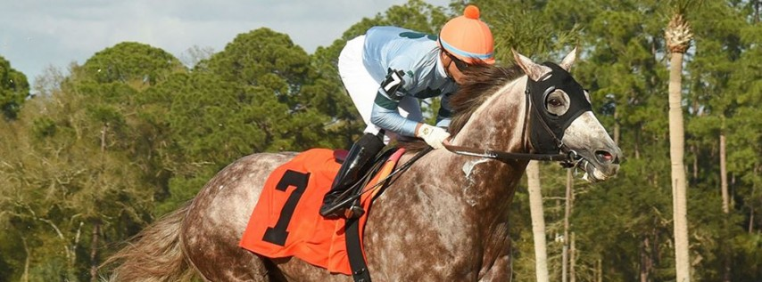 Festival Day 40 at Tampa Bay Downs