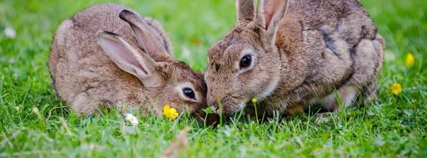 Easter Egg Hunt and Celebration
