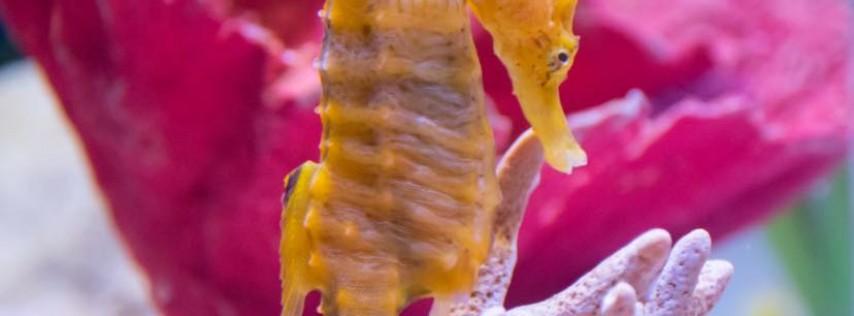Florida Aquarium SEA-SPAN