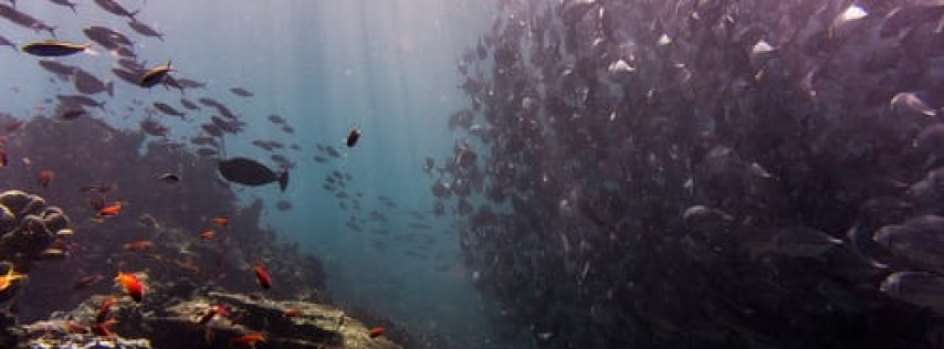 Fall Fun Fest 'Under The Sea' 2020