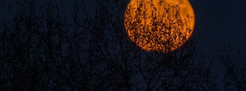 Halloween Under the Full Moon
