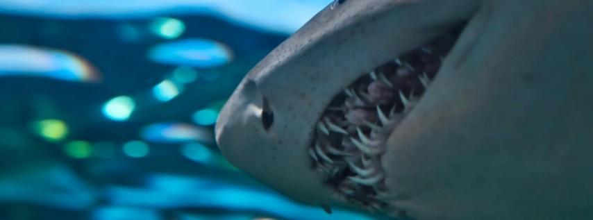 2021 Shark's Tooth Festival