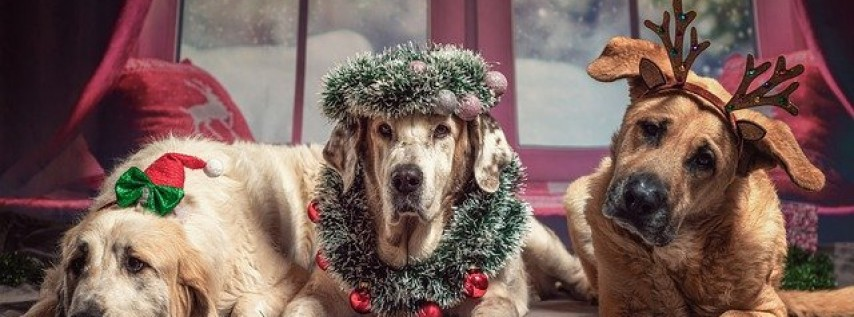 Pet Photos with Santa Under The Wishing Tree at Rosemary Square