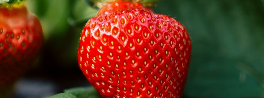 2021 Annual Habitat Ocala Strawberry Festival