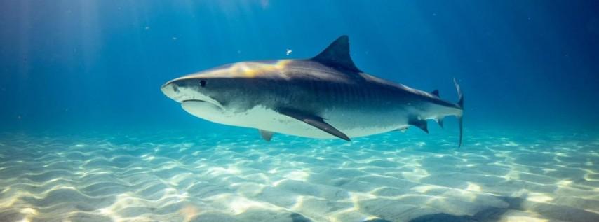 SharkCon 7 Tampa