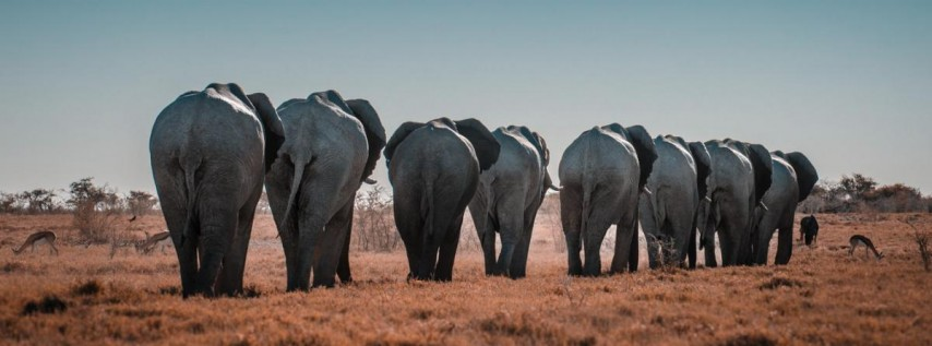Breakfast with African Elephants sponsored by Nutella