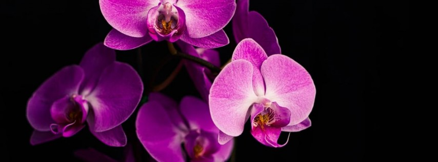 2021 Orchid Expo